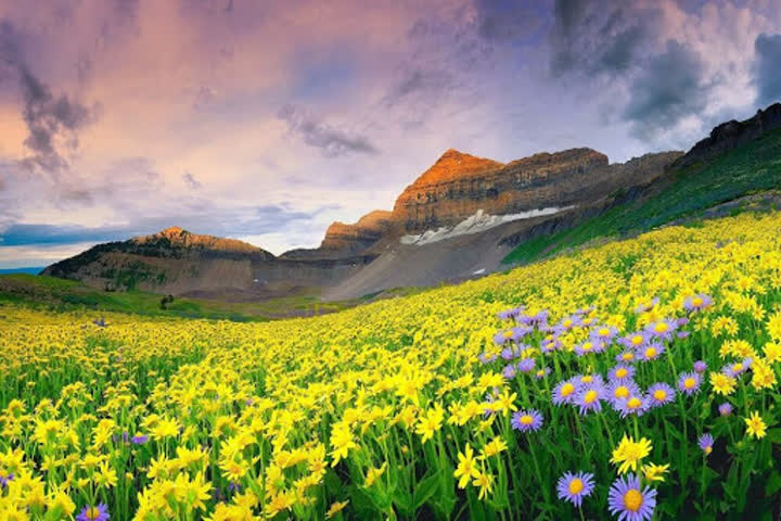 uttarakhand-valley-of-flowers-opened-for-tourist
